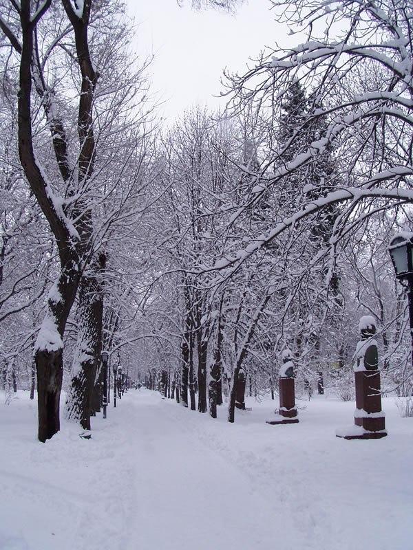 Chisinau Winter
