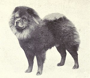 Chow Chow - A Chow Chow in 1915.