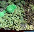 Chrysocolla-Antlerite-238942.jpg