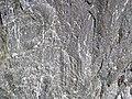 Clast-poor mixtite (Coleman Member, Gowganda Formation, Paleoproterozoic, ~2.3 Ga; Percival Lake roadcut, Ontario, Canada) 9 (33846083338).jpg