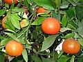 Clementine Israel.jpg