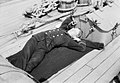 Clerk R. R. Wallace asleep on the quarterdeck of HMS 'Aurora' (1913). RMG N22880.jpg