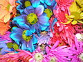 Colorful Crazy Daisies (2) (2530055501).jpg
