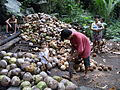 Copra farming in Romblon.JPG