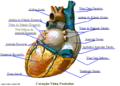 CoraçãoPosteriorPY5aal.png