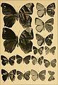 """Correspondenz-blatt des Entomologischen Vereins """"Iris"""" zu Dresden (1884) (20513539359).jpg"""