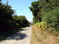 Country lane near Llanfihangel-y-Creuddyn - geograph.org.uk - 208118.jpg