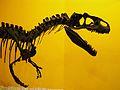 Crani d'Al·losaure (Allosaurus fragilis) al Museu de Ciències Naturals de València.JPG