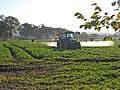 Crop spraying - geograph.org.uk - 274618.jpg