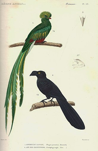 Edward Griffith (zoologist) - Plate from Règne animal