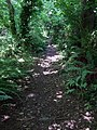 Cwm Dyffryn footpath, July - geograph.org.uk - 895827.jpg