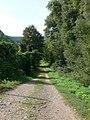 Cycle track along the Rhine west of Bingen - geo.hlipp.de - 21461.jpg