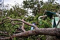Cyclone Marcus in Darwin – Damaged structure by fallen tree 01.jpg