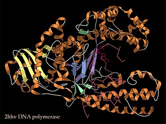 Ribbon diagram - Image: DN Apolymerase DNA complex 2HHV ribbon