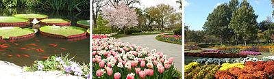 Dallas Arboretum Seasons