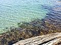 Dancing Seaweed.jpg