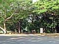 Darwin Bontanic Gardens.jpg