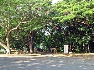 George Brown Darwin Botanic Gardens - Image: Darwin Bontanic Gardens