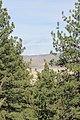 Davis Creek Park - panoramio (27).jpg