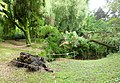 Dead Weeping Golden Willow.jpg