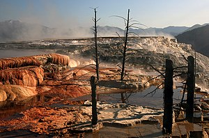 Mammoth Hot Springs - Image: Dead trees at Mammoth Hot Springs