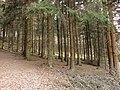 Der Weg auf dem Hügel -12.3.2011 - panoramio.jpg
