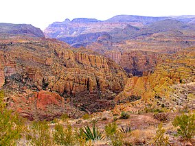 Desert Foliage And Canyon In Arizona.jpg