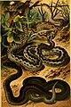 Deutschlands Amphibien und Reptilien (1890) (20862229616).jpg
