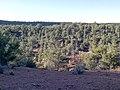 Devil's Bridge Trail, Sedona, Arizona - panoramio (19).jpg