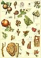 Die insekten Mitteleuropas insbesondere Deutschlands (1914-(26)) (20740162898).jpg