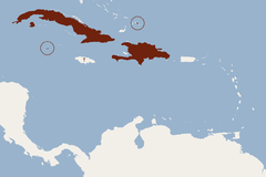 Distribution of Brachyphylla nana.png