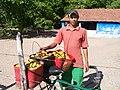 Divan o transportador do Cajú - panoramio.jpg
