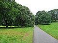 Drive through Dunster Old Park - geograph.org.uk - 1702185.jpg