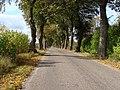 Droga w kierunku Rożyńska - panoramio.jpg