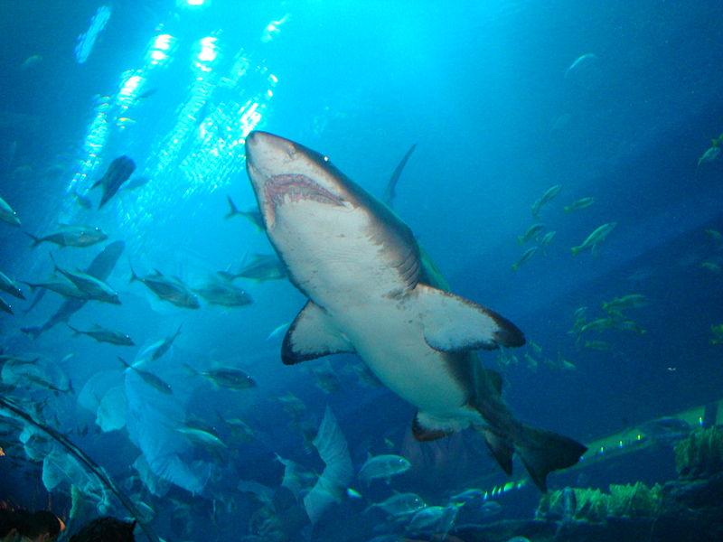 File:Dubai Mall Aquarium4.jpg
