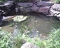 Duck duck (508451344).jpg