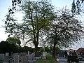 Duernkrut Christusdorn P1390685.JPG