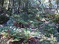 Dun Mountain Trail 12.JPG