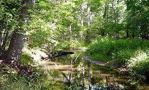 Dunes Creek - Dunes Creek