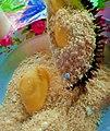 Durian dengan sagon.jpg