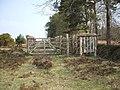 Edge of Amberwood Inclosure - geograph.org.uk - 403948.jpg