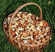 Edible fungi in basket 2020 G8.jpg
