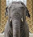 Eléphante Marguerite (ou Parkie) au Musée d'Orsay 10.jpg