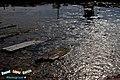 El tan conocido «moco de rana» donde suele encontrarse, en una balseja' - panoramio.jpg