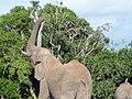 Elefant - panoramio (5).jpg