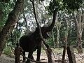 Elephant from Bannerghatta National Park 8692.JPG