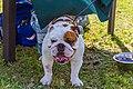 Encontro Dog Institute (41893163692).jpg