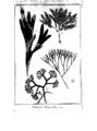Encyclopedie volume 5-152.png