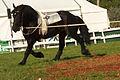 Equipe Australienne de voltige . Lakes Titan élevage du Grand Prainville Cl J Weber0003 (23456691383).jpg