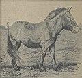Equus przewalskii-Diffloth 1923.jpg